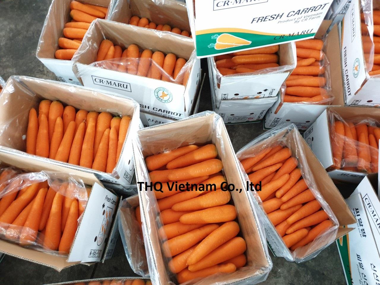 Fresh Carrot From Vietnam